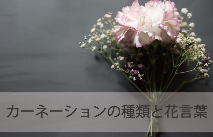 カーネーションの種類と花言葉