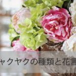 シャクヤクの種類と花言葉