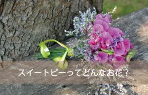 スイートピーってどんなお花?