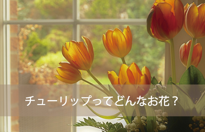 チューリップってどんなお花?
