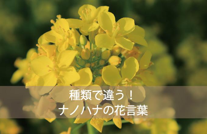 ナノハナってどんなお花?
