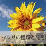 ヒマワリの種類と花言葉