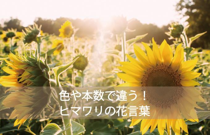 ヒマワリの花言葉
