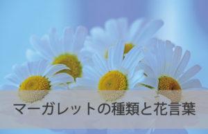 マーガレットの種類と花言葉