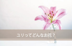 ユリってどんな花?