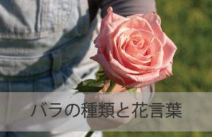 バラの種類と花言葉