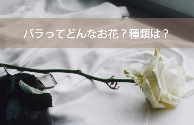 バラってどんなお花?種類は?