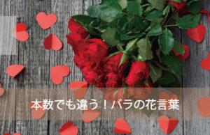 バラの本数でも花言葉が違う!