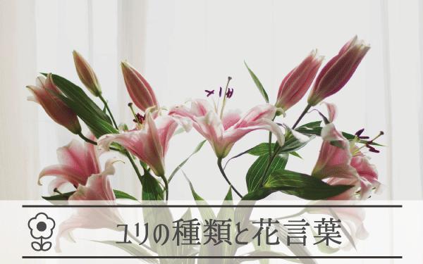 ユリの種類と花言葉
