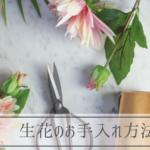 生花のお手入れ方法