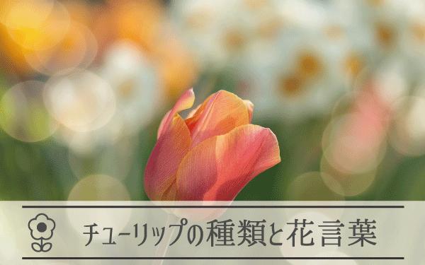 チューリップの種類と花言葉