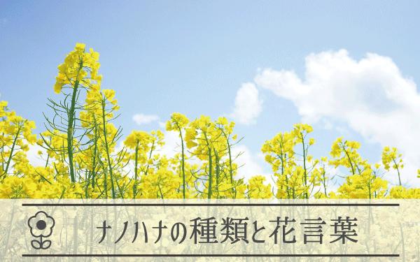 ナノハナの種類と花言葉