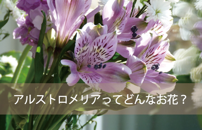 アルストロメリアってどんなお花?