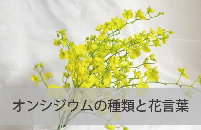 オンシジウムの種類と花言葉