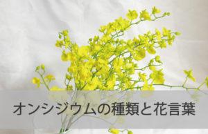オンシジウムってどんなお花?