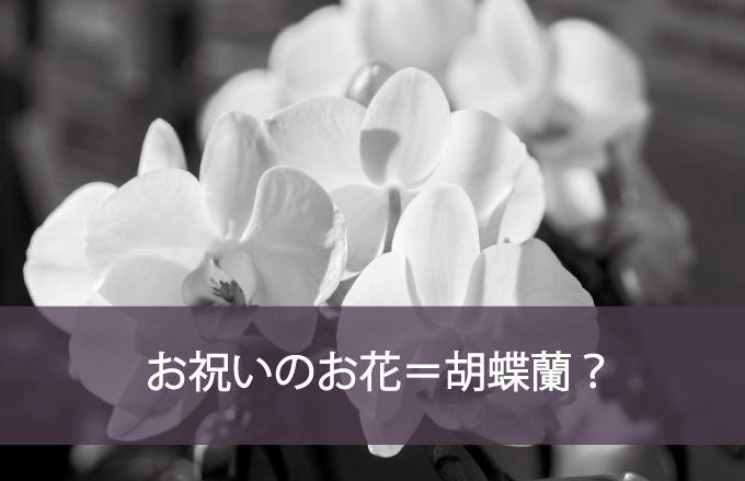 お祝いのお花=胡蝶蘭?