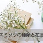 カスミソウの種類と花言葉