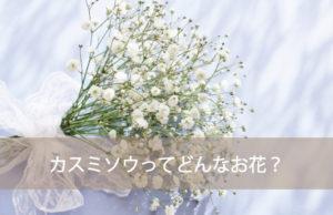 カスミソウの花言葉