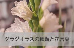 グラジオラスの種類と花言葉