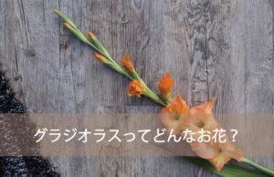 グラジオラスってどんなお花?