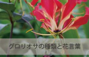グロリオサの種類と花言葉
