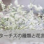 スターチスの種類と花言葉