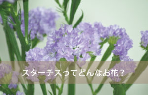 スターチスってどんなお花?