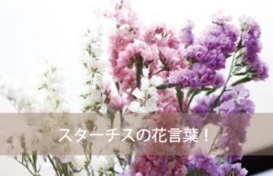 スターチスの花言葉