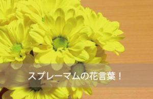 スプレーマムの花言葉