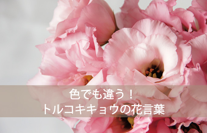 トルコキキョウの花言葉