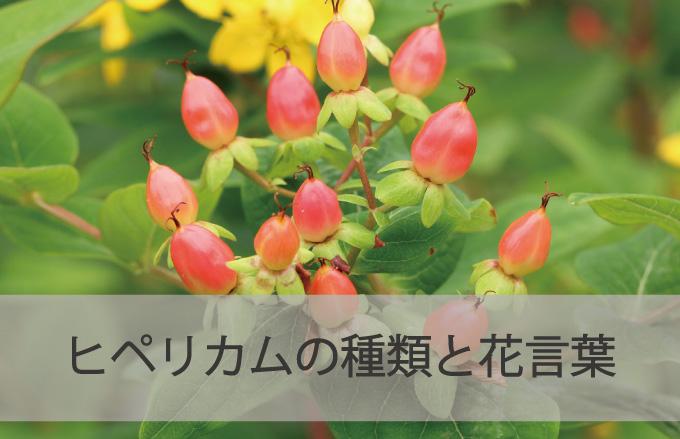 ヒペリカムの種類と花言葉