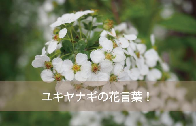 ユキヤナギの花言葉