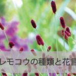 ワレモコウの種類と花言葉