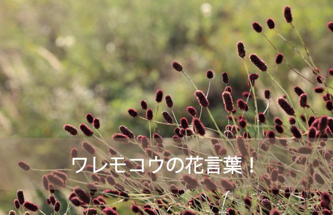 ワレモコウの花言葉