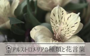アルストロメリアの種類と花言葉