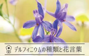デルフィニウムの種類と花言葉