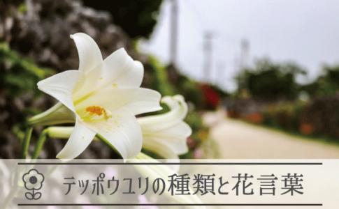 テッポウユリの種類と花言葉