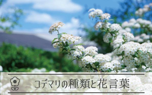 コデマリの種類と花言葉