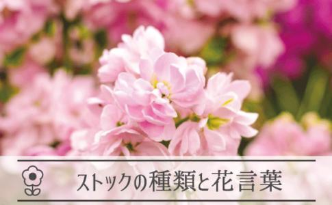 ストックの種類と花言葉