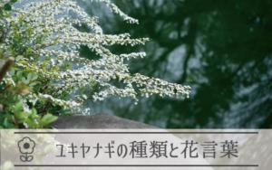 ユキヤナギの種類と花言葉
