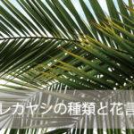 アレカヤシの種類と花言葉