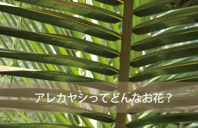 アレカヤシってどんな植物?