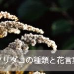 ソリダコ(ソリダゴ)の種類と花言葉