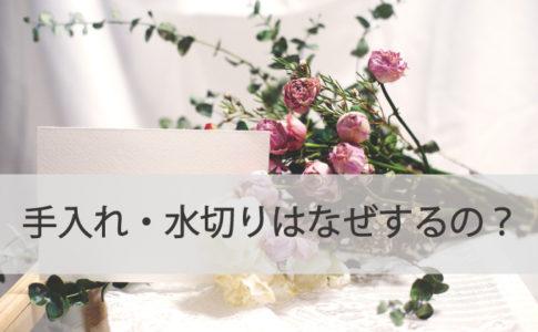 お花の手入れ・水切りはなぜするのか?