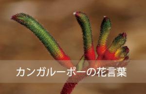 カンガルーポーの花言葉