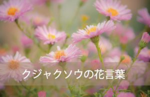 クジャクソウの花言葉