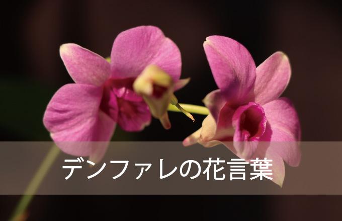 デンファレの花言葉