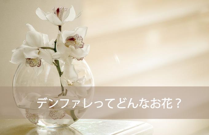 デンファレってどんなお花?