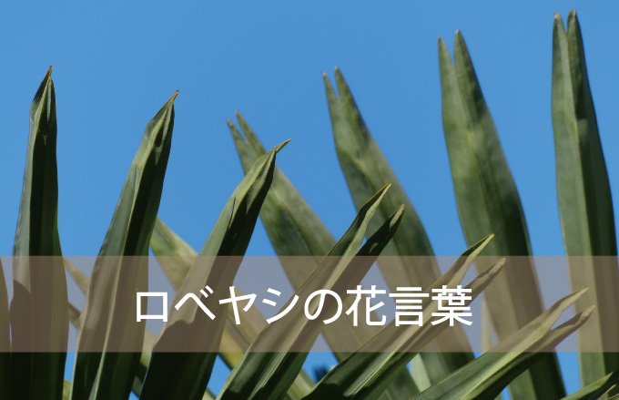 ロベヤシの花言葉