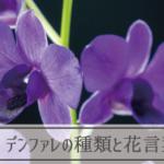 デンファレの種類と花言葉